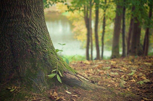 base of tree